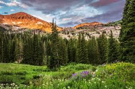 Utah forest images Albion basin utah utah united states mountain rock tree forest jpg