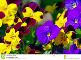 spring flowers in greenhouse stock image image 9134751
