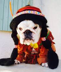 Halloween Costumes Dogs 452 Costumes Legged Friends Images