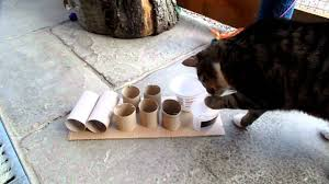cat using feeder puzzle mp4 youtube