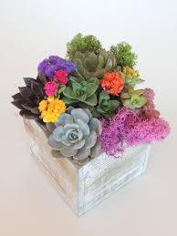 succulent arrangements dscn1640 e1483676139966 jpg