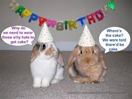 rabbit birthday happy birthday beka binkybunny house rabbit information