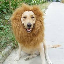 lion dogs popular dog lion mane buy cheap dog lion mane lots from china dog