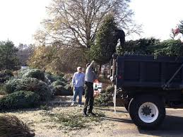 tree recycling starts dec 26 at allatoona lake