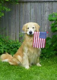 Flag Day Images Flag Day Golden Retriever Near The Fence Photo And Wallpaper