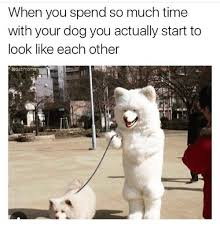 Much Dog Meme - when you spend so much time with your dog you actually start to