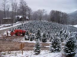 c and j christmas trees home