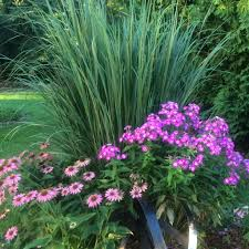 ornamental grasses vines kentwood gardens