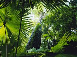 Adaptations Of Tropical Rainforest Plants - tropical rainforest plants in australia