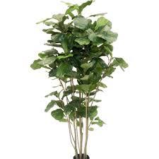 artificial indoor plants nz indoor flowering plants nz