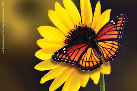 wildlife diversity citizen science programs oklahoma department