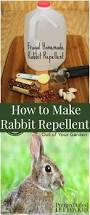 How To Keep Deer Out Of Vegetable Garden by How To Make Rabbit Repellent Easy Diy Rabbit Deterrent Recipe