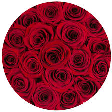 the million roses collection