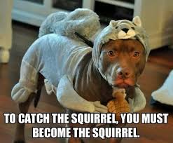 Squirrel Meme - title is going to finally get that damn squirrel meme by