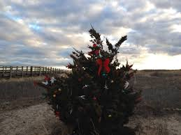 buy local where to find eco friendly christmas trees on cape cod