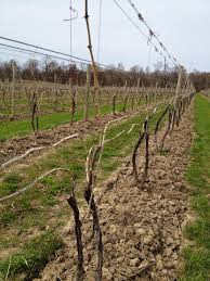 food from the roots the finger lakes ny lake seneca viticulture