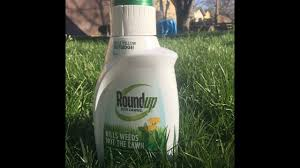 Off Backyard Spray Reviews New Roundup Weed Killer Spray For Lawns Review And Results Youtube