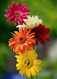549 best images about flowers and garden on pinterest gardens