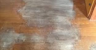removing urine stains from hardwood floors hometalk