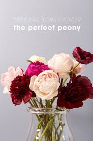 wedding flowers peonies everything you need to about using peonies in your wedding