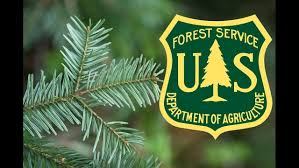 christmas tree cutting permits now on sale krcr