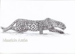 how to draw a stalking leopard using x ray vision chasing