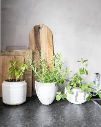 trendy pet safe indoor plants 2017 brit co