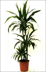 Indoor House Plants Low Light Tropical House Plants Low Light Landscaping U0026 Backyards Ideas