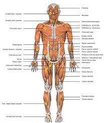 Anatomy Of Women Body Human Anatomy Charts Page 350 Of 351 Inner Body Anatomy