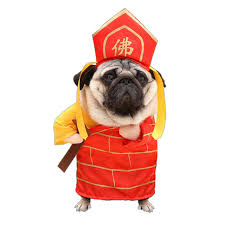 pet costumes the journey to the west pet costumes tang monk buddha