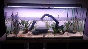 Wohnzimmertisch Aquarium Our Axolotl Aquarium Resort Axolotl Diary Pinterest Aquarium