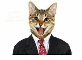 Cat Suit Meme - this cute cat picture will get you banned from facebook