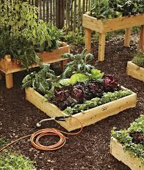 backyard raised bed vegetable garden gardening ideas