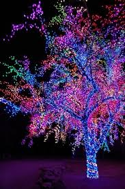 Outdoor Up Lighting For Trees Amazing Outdoor Christmas Lights 40 Pics