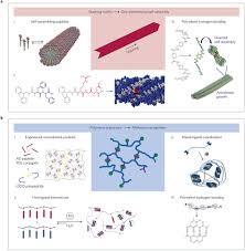 supramolecular biomaterials nature materials nature research