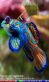 aquarium fish photos and names 1000 aquarium ideas
