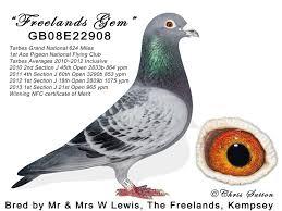 belgian shepherd kempsey the magic of the tarbes grand national uk racing pigeon magazine