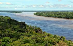 amazon rainforest native plants amazon rainforest wikiwand