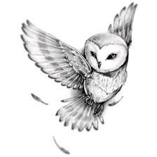 small owl drawing clipartxtras