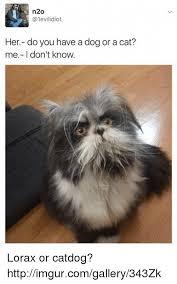 Cat Cocaine Meme - 25 best memes about cocaine gif cocaine gif memes