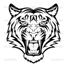 tiger drawing images at getdrawings com free for personal use