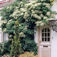 climbing plants on the garden walls www coolgarden me