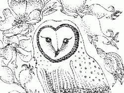 barn owl colouring barn owl trust