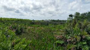 plant communities environmental nature center another visit to green cay nature center the creative cottage