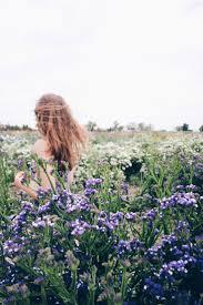 the 25 best field of flowers ideas on pinterest daisy field
