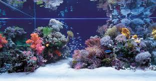 Georgia Aquarium Floor Plan by Best 25 Aquarium Online Ideas On Pinterest Light Bulb Terrarium