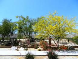 backyard desert landscaping ideas u2014 indoor outdoor homes unique