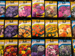 flower seed packets flower seed packets on sale editorial image image of perennial