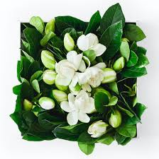 flower delivery service luxe flower delivery services for last minute floral arrangements