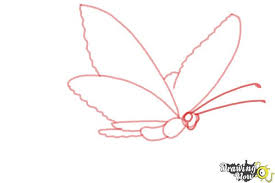 how to draw a butterfly by drawingnow
